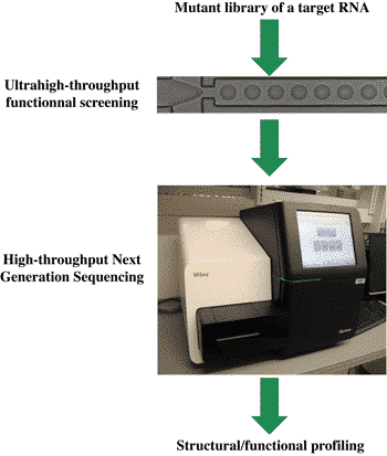 Very high throughput screening pipeline