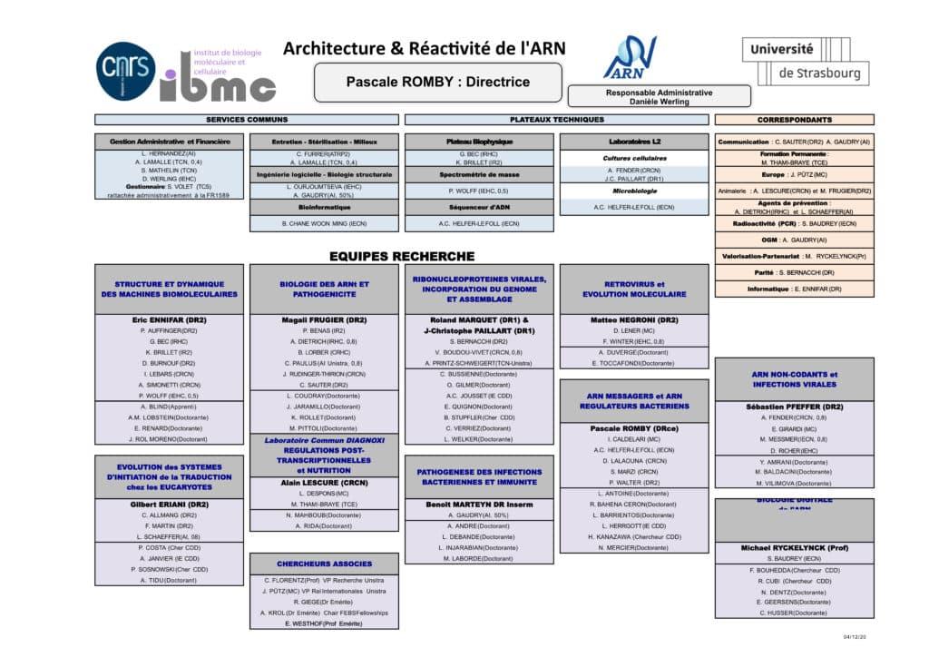 Organisation chart ARN