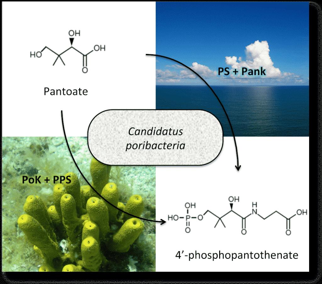 Alternative metabolic pathway